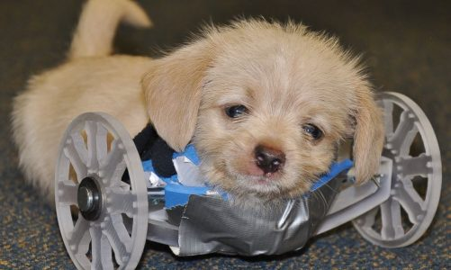Adorable Puppy Gets Fitted for 3-D Printed Wheelchair